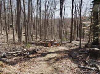 WahMAINT-Logs for bucking